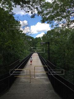 子ども,1人,空,夏,橋,森林,木,屋外,青空,歩道,クラウド,秘密の橋