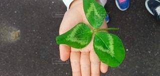 子ども,1人,春,手,三つ葉,人,クローバー,草木,幸運