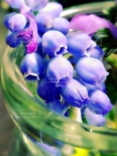 花,春,紫,ラベンダー,草花,妖精,スズラン,ムスカリ,草木