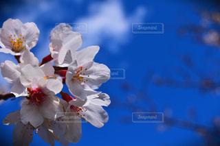 空,花,春,桜,青い空,さくら