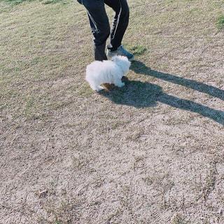犬,動物,屋外,散歩,草
