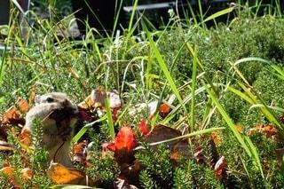自然,動物,かわいい,枯れ葉,リス,可愛い,小動物,シマリス,ほっぺ,ほっぺた,りす,しまりす,頬袋