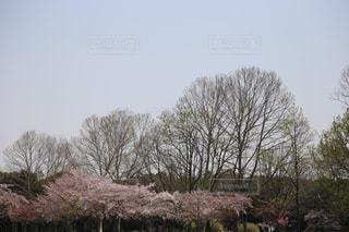 空,花,桜