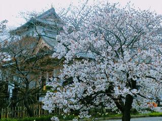 花,城,桜の花,さくら,松前城