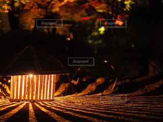 秋,夜,紅葉,屋外,京都,夕暮れ,暗い,レトロ,樹木,イルミネーション,ライトアップ,モダン,日本,ロマンチック,灯篭,和,明るい,風情,灯火,ナイト
