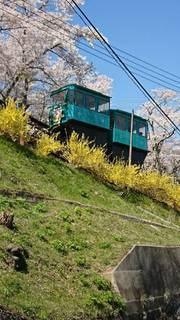 公園,花,桜,緑,青空,草,山頂,散歩道,ロープウェイ