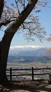 風景,桜,青空,雪山,観光,お花見,山頂,住宅街