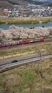 桜,緑,電車,川,線路,住宅,鉄道,千本桜