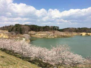 自然,春,桜,湖,雲,青空,散歩道