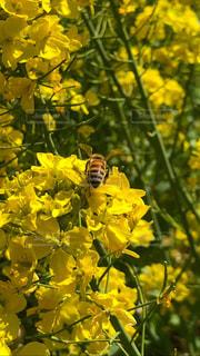 花,蜂,昆虫,草木