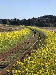 花,黄色,景色,鉄道