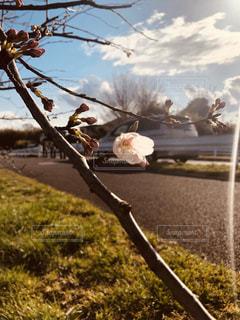 空,花,屋外,車,樹木