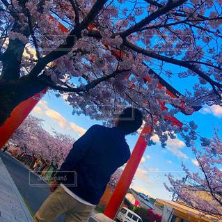 男性,風景,空,花,桜,屋外,神社,樹木,人,草木