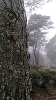 風景,公園,霧,樹木,どんより