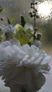 花,屋内,白,花びら,草木,ブロッサム