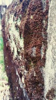 木のクローズアップの写真・画像素材[3073274]