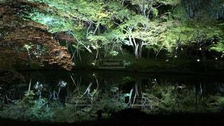 緑の芝生と木々 に囲まれた滝の写真・画像素材[1160733]