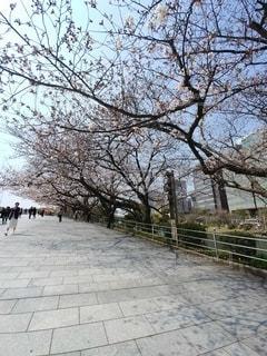 風景,空,桜,屋外,晴天,樹木,お花見