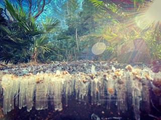 霜柱,冬の朝,氷の世界,氷と光