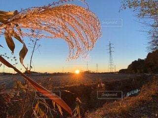自然,風景,空,冬,屋外,朝日,草,日の光,眩しい,田んぼ,正月,お正月,日の出,オレンジ色,風物詩,素敵,新年,初日の出,近所,輝く,パワー,早起き,すすき,電塔,自然のフレーム