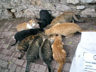 猫,イタリア,猫団子