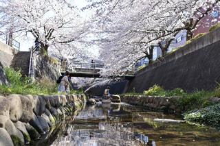 子ども,自然,花,春,川,水面,岩