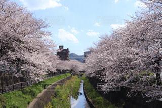 自然,空,春,水面,桜の花,さくら