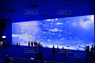 魚,水族館,サメ,巨大水槽