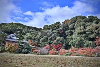 自然,風景,空,秋,屋外,山,樹木,草木