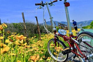空,自転車,屋外,菜の花,草,草木,ホイール