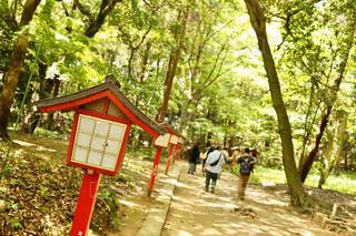 5人以上,公園,森林,木,神社,樹木,人,草木