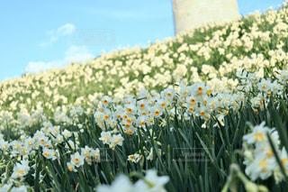 空,花,春,屋外,草木