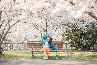 春のお知らせの写真・画像素材[3075657]