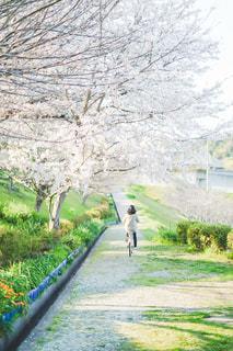 春を駆け抜けての写真・画像素材[3075660]