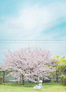春と女の子の写真・画像素材[3084275]