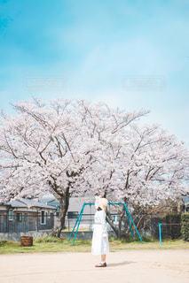 春の兆しの写真・画像素材[3086701]