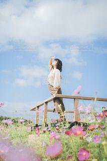 青空とコスモスの写真・画像素材[3243913]