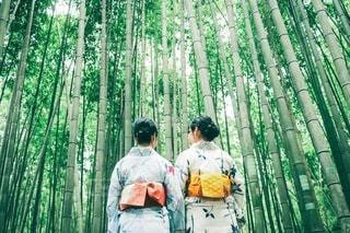 竹やぶの写真・画像素材[3522302]
