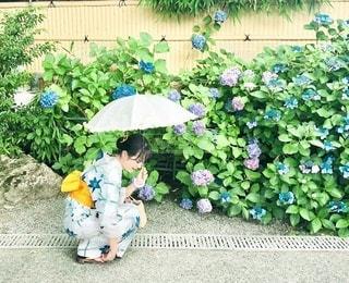 紫陽花との写真・画像素材[3522307]