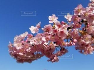 空,花,春,青い空,景色,桜の花,さくら,ブロッサム