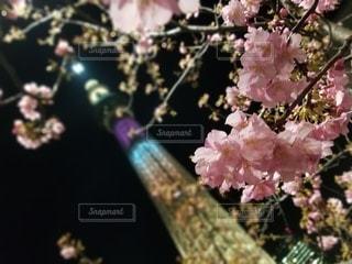 花,夜景,スカイツリー,景色,ライトアップ,ブロッサム