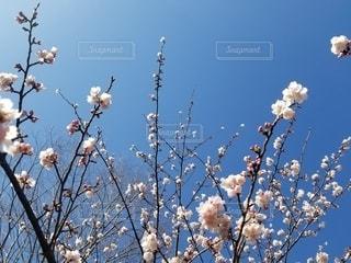 空,花,春,樹木,草木