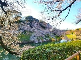 自然,風景,空,花,春,桜,湖,水面,樹木,新緑,草木,さくら,ガーデン