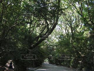 木のクローズアップと道の写真・画像素材[3159360]