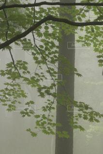 霧に覆われた緑の写真・画像素材[3189236]