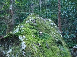 森の中の木の写真・画像素材[3036598]