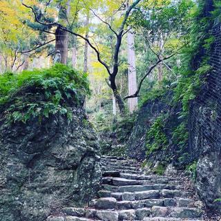 木々に囲まれた滝の写真・画像素材[3036597]