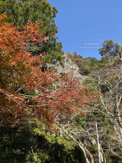 風景,秋,森林,屋外,樹木