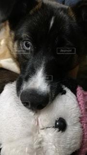 犬のクローズアップの写真・画像素材[3183772]
