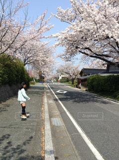 春,青空,女の子,道,通り,さくら